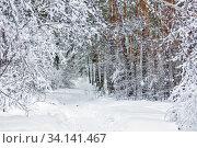 Тропинка через сугробы в заснеженном лесу. Западная Сибирь, Россия (2020 год). Стоковое фото, фотограф Евгений Мухортов / Фотобанк Лори