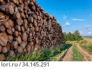 Купить «Piled logs of harvested wood timber next to forest. Czech Republic Bark beetle attack calamity deforestation, European landscape», фото № 34145291, снято 14 июля 2020 г. (c) easy Fotostock / Фотобанк Лори
