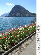 Embankment of the lake Lugano with flowering tulips. View of the San Salvatore mountain. Lugano, canton of Ticino, Switzerland, Europe. (2018 год). Стоковое фото, фотограф Bala-Kate / Фотобанк Лори