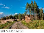 Купить «Piled logs of harvested wood timber next to forest. Czech Republic Bark beetle attack calamity deforestation, European landscape», фото № 34152191, снято 14 июля 2020 г. (c) easy Fotostock / Фотобанк Лори