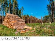 Купить «Piled logs of harvested wood timber next to forest. Czech Republic Bark beetle attack calamity deforestation, European landscape», фото № 34153103, снято 14 июля 2020 г. (c) easy Fotostock / Фотобанк Лори