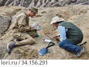 Купить «Paleontologists have discovered a fossils in the desert», фото № 34156291, снято 13 июня 2020 г. (c) Евгений Харитонов / Фотобанк Лори