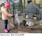 Пятилетняя девочка играет с кроликом в вольере. Стоковое фото, фотограф Ирина Борсученко / Фотобанк Лори