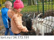 Дети кормят козлят осенними листьями. Мини-зоопарк (2019 год). Редакционное фото, фотограф Ирина Борсученко / Фотобанк Лори