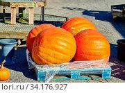 Pumpkin patch. Fresh giant pumpkins on a farm market. Rural landscape, Connecticut, USA. Стоковое фото, фотограф Zoonar.com/NIKOLAY OKHITIN / easy Fotostock / Фотобанк Лори