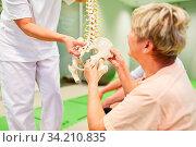 Physiotherapeut erklärt Senioren Rückenschmerzen am Modell einer Wirbelsäule im der Reha. Стоковое фото, фотограф Zoonar.com/Robert Kneschke / age Fotostock / Фотобанк Лори