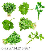 Collection of fresh cilantro herbs isolated on white background. Стоковое фото, фотограф Zoonar.com/Valery Voennyy / easy Fotostock / Фотобанк Лори