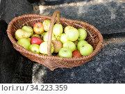 Korb, Äpfel, apfel, obst, obstkorb, ernte, lebensmittel, nahrung, nahrungsmittel, frucht, früchte. Стоковое фото, фотограф Zoonar.com/Volker Rauch / age Fotostock / Фотобанк Лори