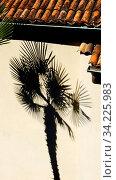 Dunkler Schatten einer Tessiner Palme auf einer sandfarbenen Hauswand. Hochformat. Dark shadow of a Ticino palm tree on a sand-colored house wall. Vertical format. Стоковое фото, фотограф Zoonar.com/Bernhard Kuh / easy Fotostock / Фотобанк Лори