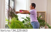 woman spraying houseplant with water at home. Стоковое видео, видеограф Syda Productions / Фотобанк Лори