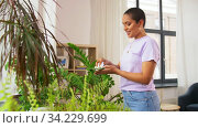 happy african american woman cleaning houseplant. Стоковое видео, видеограф Syda Productions / Фотобанк Лори