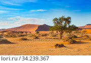 Landscape of the Namib desert, Sossusvlei region, Namibia, March. Стоковое фото, фотограф Ernie Janes / Nature Picture Library / Фотобанк Лори