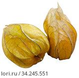 Closeup of yellow ripe physalis fruit. Стоковое фото, фотограф Яков Филимонов / Фотобанк Лори