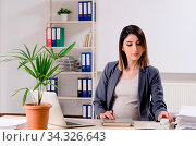 Купить «Young pregnant employee working in the office», фото № 34326643, снято 5 августа 2020 г. (c) easy Fotostock / Фотобанк Лори