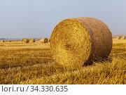 Agricultural field with straw stacks. Стоковое фото, фотограф Игорь Лейчонок / Фотобанк Лори