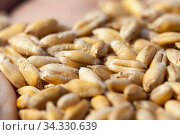 Wheat or rye sown. Стоковое фото, фотограф Игорь Лейчонок / Фотобанк Лори