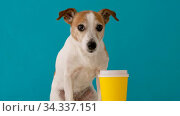 Dog yellow paper cup. Стоковое видео, видеограф Ekaterina Demidova / Фотобанк Лори