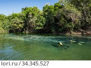 Photographer Franco Banfi snorkeling in search of fish in the Rio Sucuri, Bonito, Mato Grosso do Sul, Brazil. Стоковое фото, фотограф Franco  Banfi / Nature Picture Library / Фотобанк Лори