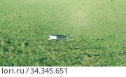 Купить «Low orbital flight around man on green grass with notebook pad at yellow rural field.», видеоролик № 34345651, снято 21 марта 2019 г. (c) Александр Маркин / Фотобанк Лори