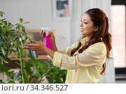 asian woman spraying houseplant with water at home. Стоковое фото, фотограф Syda Productions / Фотобанк Лори