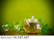summer refreshing organic tea from currant leaves in a glass teapot. Стоковое фото, фотограф Peredniankina / Фотобанк Лори