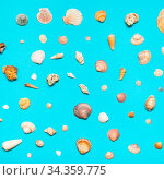 Various natural dried sea shells on turquoise blue colour pastel paper. Стоковое фото, фотограф Zoonar.com/Valery Voennyy / easy Fotostock / Фотобанк Лори