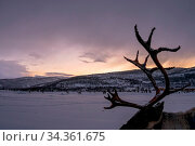 Wandering reindeer antlers with winter snowy landscape at dusk in... Стоковое фото, фотограф Zoonar.com/Pawel Opaska / easy Fotostock / Фотобанк Лори