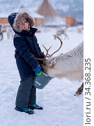 Cute little boy in a warm winter jacket feeding reindeer in the winter... Стоковое фото, фотограф Zoonar.com/Pawel Opaska / easy Fotostock / Фотобанк Лори