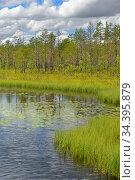 Summer landscapes. Picturesque forest boggy lake. Finnish Lapland. Стоковое фото, фотограф Валерия Попова / Фотобанк Лори