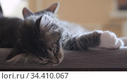 Kittens sleep together. Стоковое видео, видеограф Сергей Петерман / Фотобанк Лори