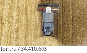 Crop harvesting combine working on agricultural field, top view from drone. Стоковое видео, видеограф Кекяляйнен Андрей / Фотобанк Лори