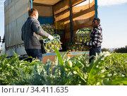 Two workers load artichoke boxes in a truck. Стоковое фото, фотограф Яков Филимонов / Фотобанк Лори