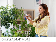 happy asian woman cleaning houseplant. Стоковое фото, фотограф Syda Productions / Фотобанк Лори
