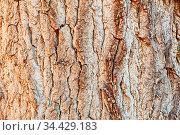 Braune alte Baum Stamm Rinde als Holz Hintergrund Textur Muster. Стоковое фото, фотограф Zoonar.com/Robert Kneschke / age Fotostock / Фотобанк Лори