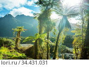 New Zealand tropical jungle forest. Green natural background. Стоковое фото, фотограф Zoonar.com/Galyna Andrushko / easy Fotostock / Фотобанк Лори