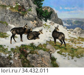 Schmitzberger Josef - Chamois in the Mountains - German School - ... Редакционное фото, фотограф Artepics / age Fotostock / Фотобанк Лори