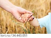 Female hand holding arm of adoptive child against yellow wheat background. Стоковое фото, фотограф Кекяляйнен Андрей / Фотобанк Лори
