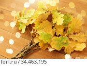 oak leaves in autumn colors on wooden table. Стоковое фото, фотограф Syda Productions / Фотобанк Лори