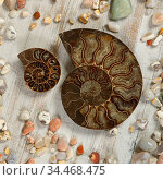 A couple of fossilized Ammonites - ancient molluscs of the order cephalopods. Стоковое фото, фотограф Алексей Кузнецов / Фотобанк Лори