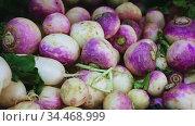 View of showcase with fresh white radishes and purple turnips in greengrocery. Стоковое видео, видеограф Яков Филимонов / Фотобанк Лори