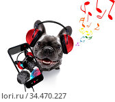 Cool dj french bulldog dog listening or singing to music with headphones... Стоковое фото, фотограф Zoonar.com/Javier Brosch / age Fotostock / Фотобанк Лори