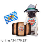 Bavarian german pug dog behind beer barrel and bavarian flags, isolated... Стоковое фото, фотограф Zoonar.com/Javier Brosch / age Fotostock / Фотобанк Лори