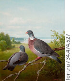 Wright Ferdinand Von - Pigeons 1 - Finnish School - 19th Century. Редакционное фото, фотограф Artepics / age Fotostock / Фотобанк Лори