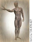 3d illustration of human body anatomy. Стоковое фото, фотограф Vitanovski Jovanche / easy Fotostock / Фотобанк Лори