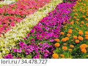 Close-up view of different flowers in the sunny day. Стоковое фото, фотограф Zoonar.com/Ruslan Gilmanshin / age Fotostock / Фотобанк Лори