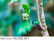 Colorful Hummingbird in Costa Rica, Central America. Стоковое фото, фотограф Zoonar.com/Galyna Andrushko / easy Fotostock / Фотобанк Лори