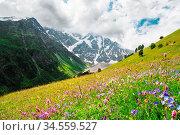 Flowering alpine meadows in the Caucasus against the background of... Стоковое фото, фотограф Zoonar.com/Ian Iankovskii / easy Fotostock / Фотобанк Лори