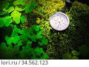 Close up handmade wooden compass, tree shadows on green nature grass... Стоковое фото, фотограф Zoonar.com/Ian Iankovskii / easy Fotostock / Фотобанк Лори