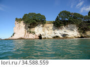 Cliff with small caves, trees growing on clifftop, view from across sea. Cathedral Cove Marine Reserve, North Island, New Zealand. April 2017. Стоковое фото, фотограф Ashish & Shanthi Chandola / Nature Picture Library / Фотобанк Лори