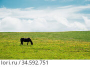 A horse on a green pasture with yellow flowers against a blue sky... Стоковое фото, фотограф Zoonar.com/Ian Iankovskii / easy Fotostock / Фотобанк Лори